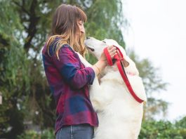 Oregon Dog Rescue, Dogs