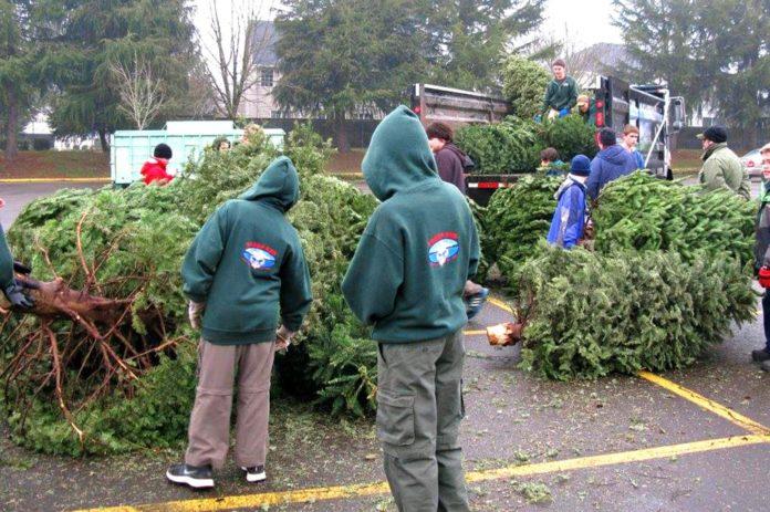 Tualatin Scouts, Holiday Season, Christmas Tree