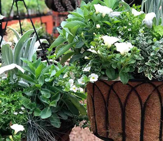 Garden Corner Hanging Baskets