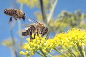 Bee City USA Affiliate, Council Corner, Bridget Brooks