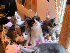 Jennifer Boskets adopted Kittens