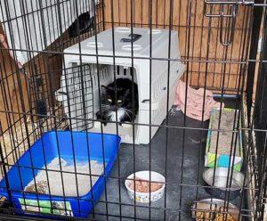 rehomed barn cat